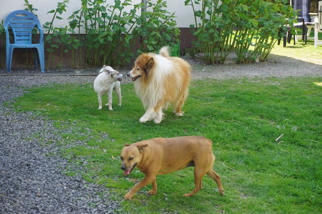 Hunde im Tier-Resort zum Forsthaus