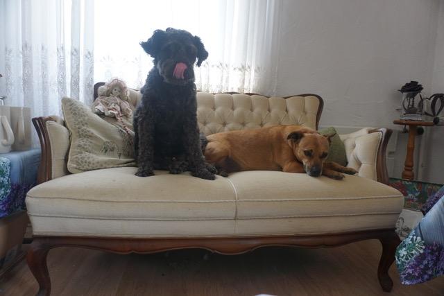 Hunde im Tier Resort zum Forsthaus